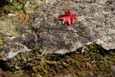 jäkälä, luonto, lehtiä, kivi, flora, ympäristö, kesä, moss