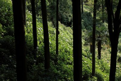wood, tree, shadow, landscape, leaf, mist, nature, forest, trees