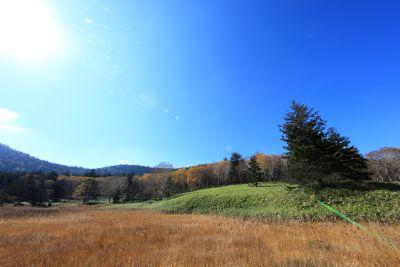 пейзаж, природа, дърво, небе, поле, трева, селски, ливада, село