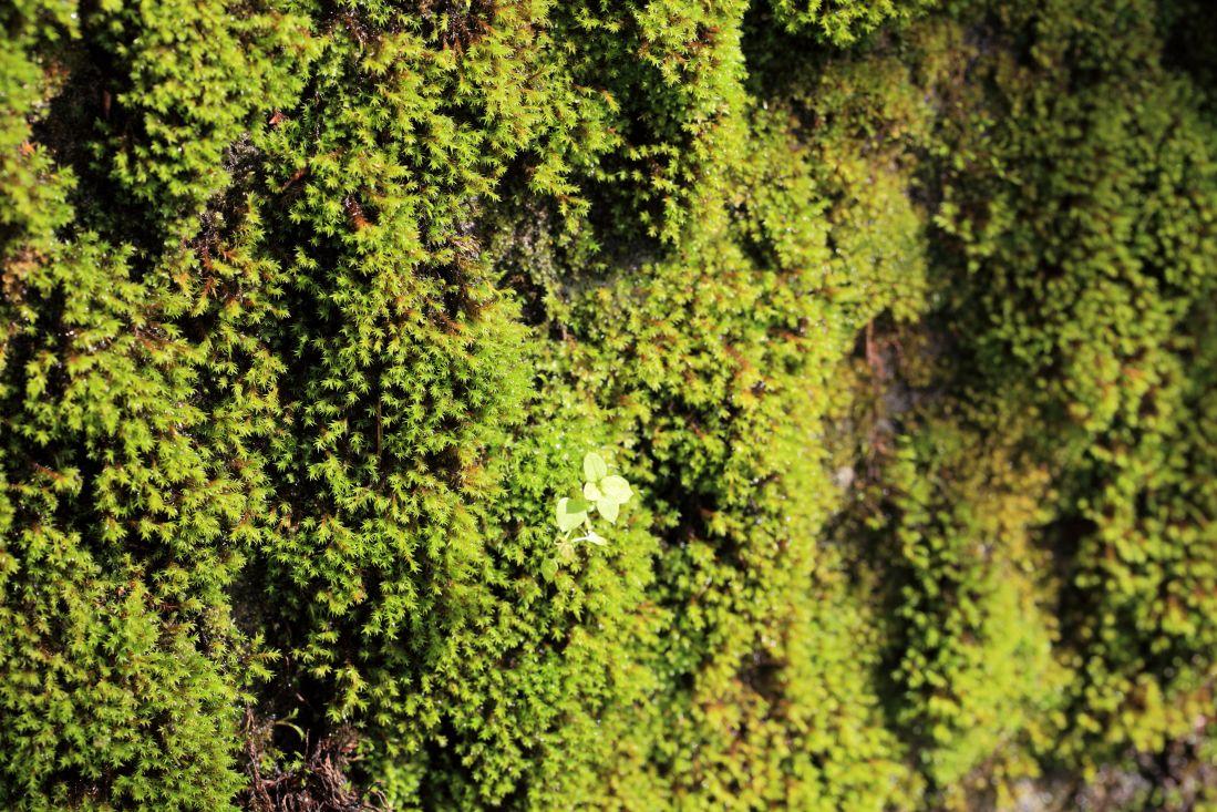 Kostenlose bild textur blatt natur moos holz for Moos bilder pflanzen