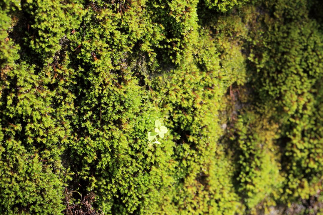 texture, leaf, nature, moss, wood, flora, old