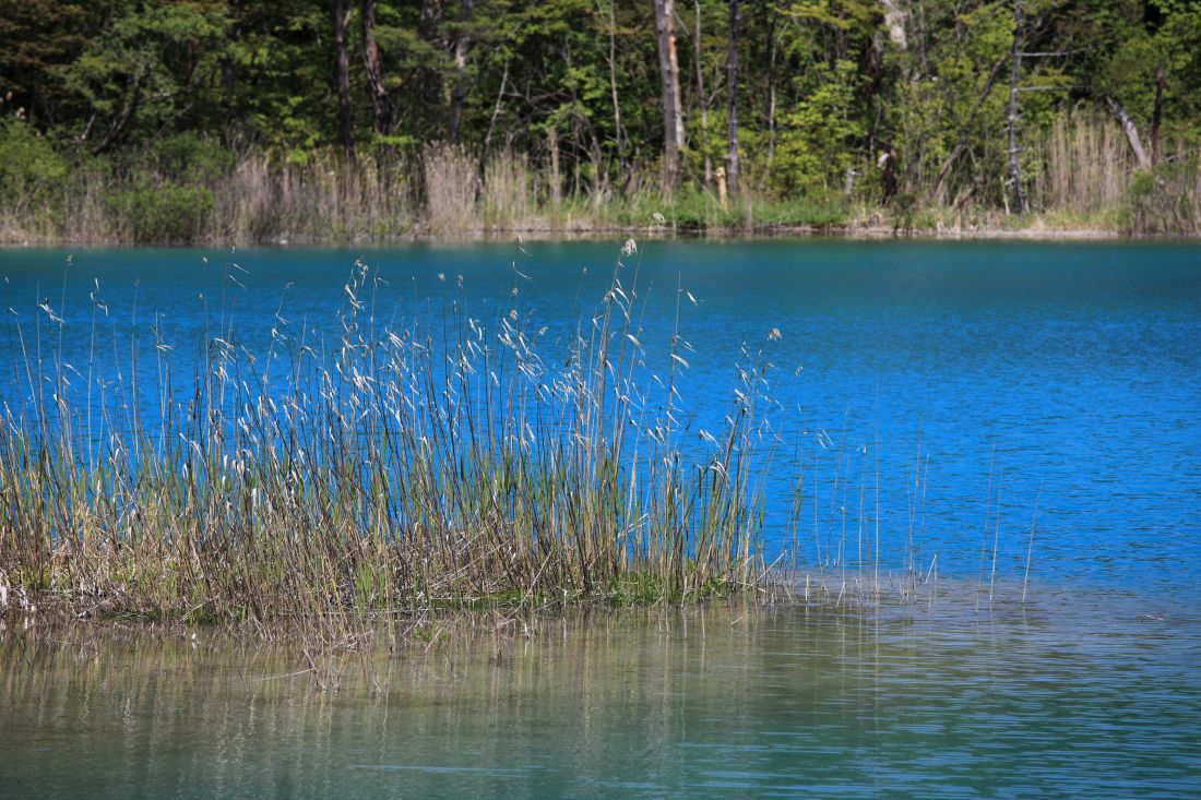 water, nature, lake, tree, forest, landscape, lakeside, shore
