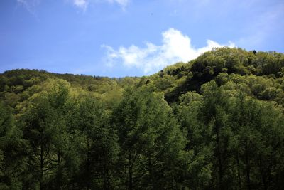 nature, landscape, tree, wood, sky, mountain, forest