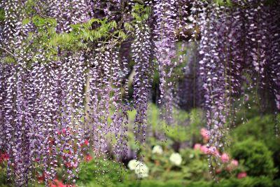 flower, nature, flora, garden, leaf, herb, plant, acacia