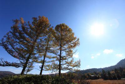 lanskap, pohon, alam, langit, kayu, berjemur, fajar, hutan, pohon, pinus