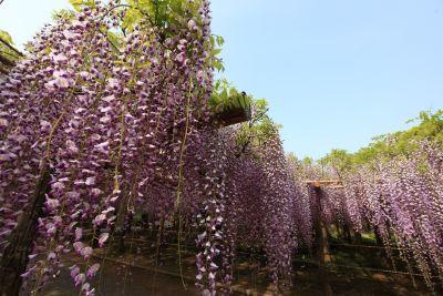 acacia, shrub, sky, flower, nature, flora, tree, leaf, garden