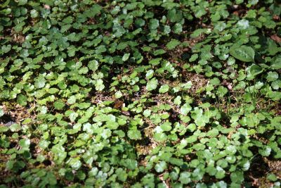 grass, leaf, flora, environment, nature, summer, plant