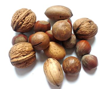 nutshell, walnut, food, buggy, nutrition, shell, seed, dry, pod