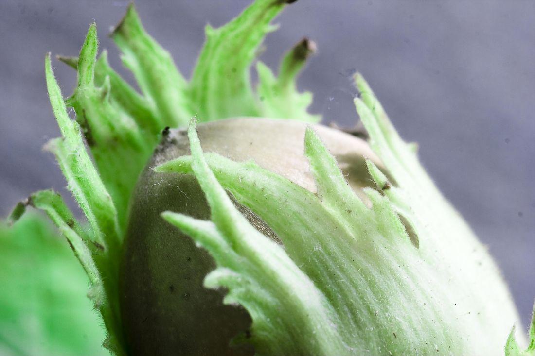 food, leaf, vegetable, nature, tree, geen, macro, seed