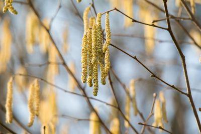 natureza, árvore, macro, flora, folha, galho