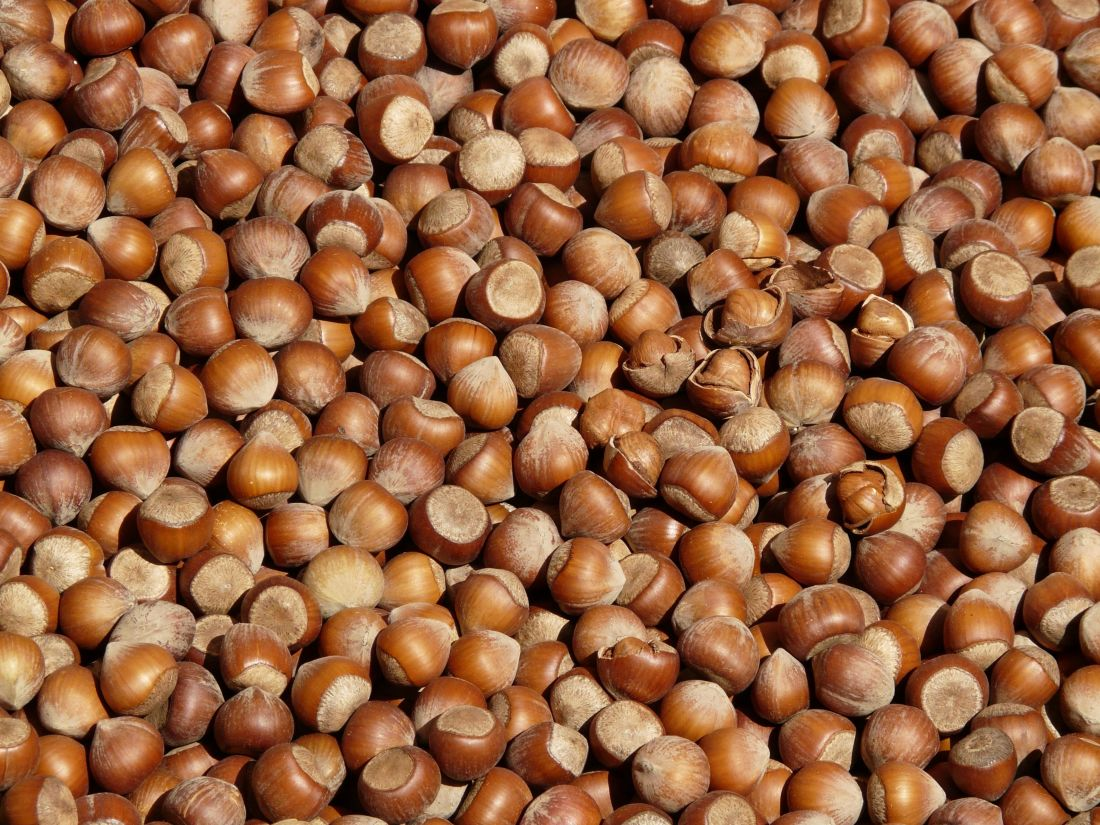 siemenet, ravitsemus, kuiva, ruoka, hasselpähkinä, ruskea