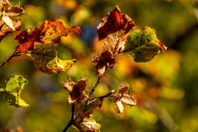 leaf, nature, tree, flora, plant, herb, autumn