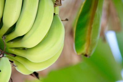 banana, nature, leaf, fruit, food, flora, organic, plant