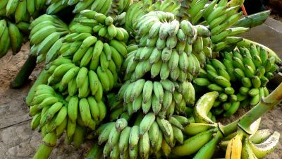 banana, fruit, food, unripe, potassium, vegetable, diet, organic