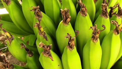 banana, frutta, potassio, verdura, cibo, pianta