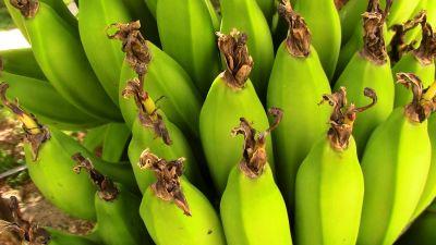banana, fruit, potassium, vegetable, food, plant