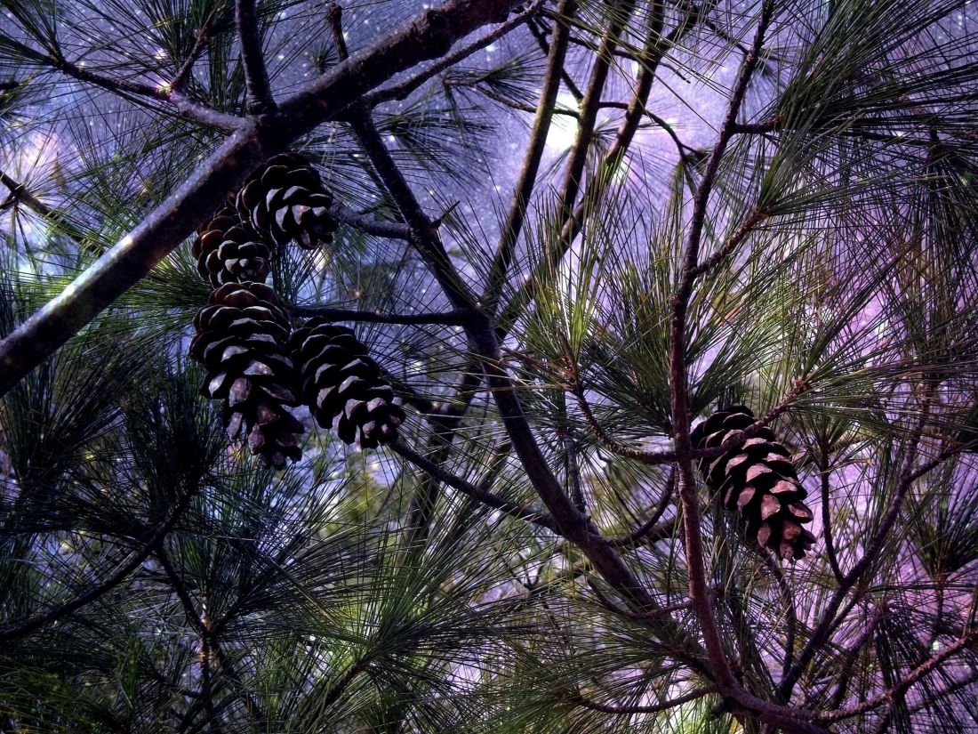 strom, dřevo, příroda, Les, rostlin, větve