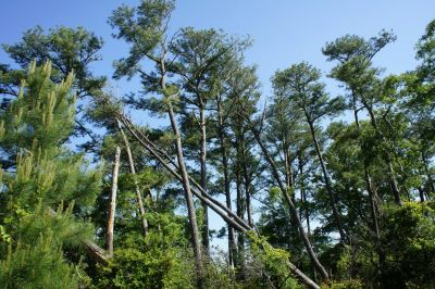 tree, wood, nature, landscape, flora, leaf, sky, summer, environment