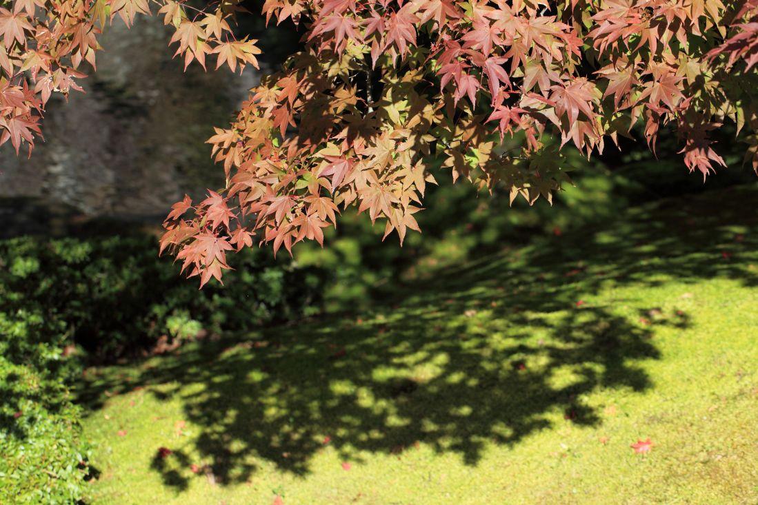 list, priroda, drvo, drvo, flore, jesen, lišće, šuma, lišće