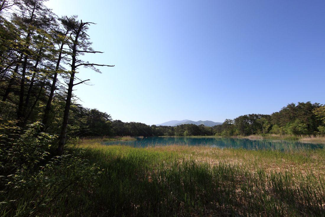 landscape, tree, nature, sky, field, grass, meadow, summer, land