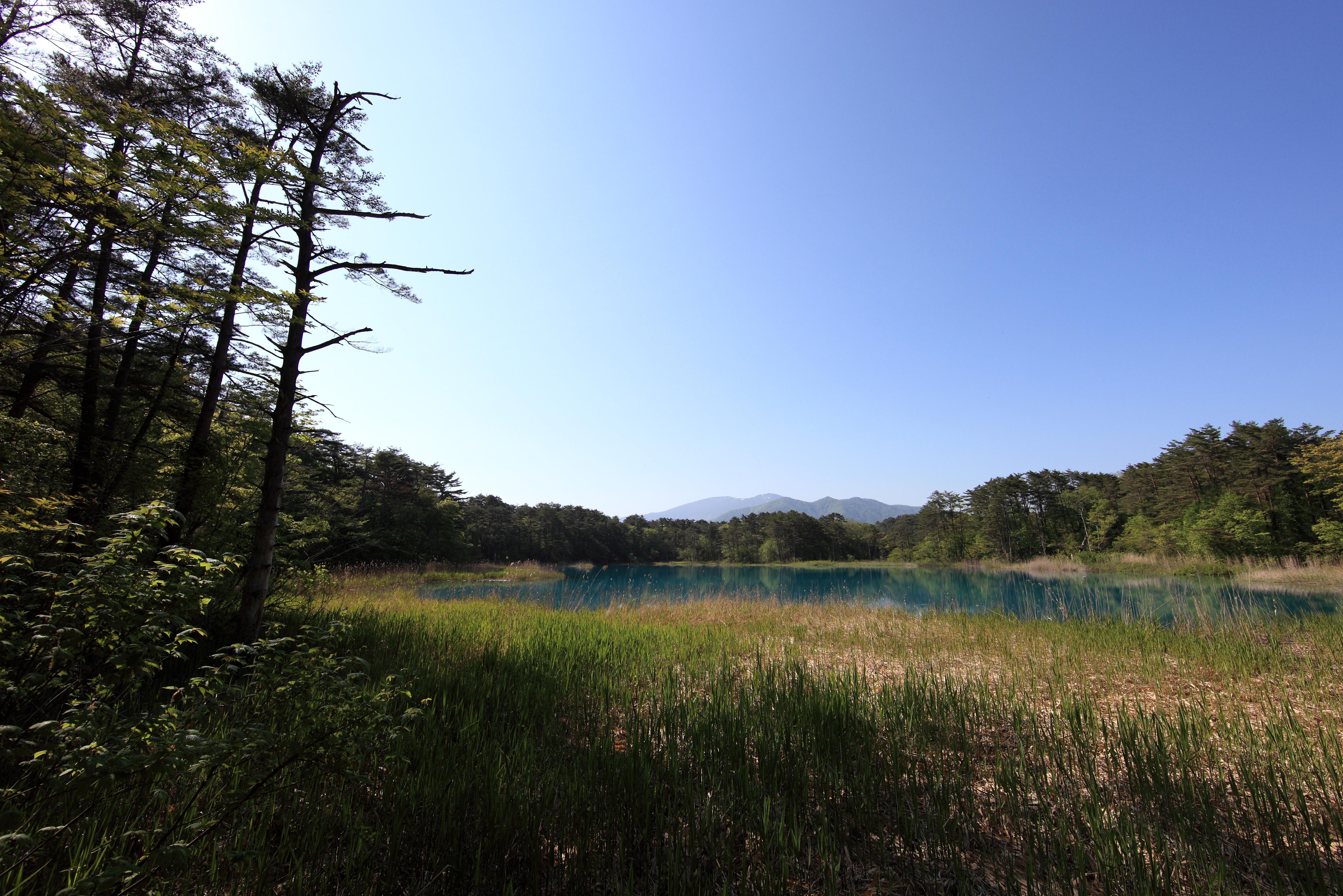 Image Libre Paysage Arbre Nature Ciel Champ Herbe Pr T Terre
