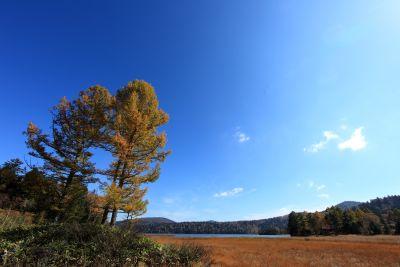 tree, landscape, nature, sky, wood, autumn, field, grass, forest