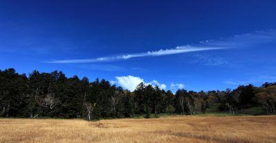landscape, tree, sky, nature, field, grass