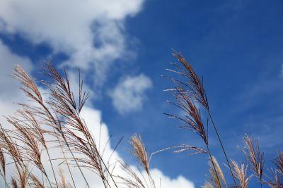 nature, sky, grass, winter, summer, landscape, reed
