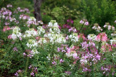 bloem, natuur, flora, zomer, blad, bloemblaadje, Tuin, gras, wild