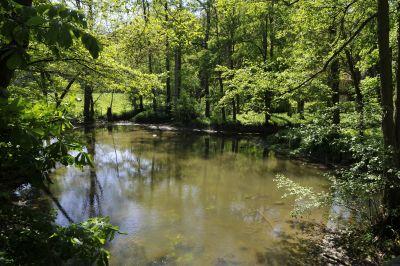 природата, дърво, вода, пейзаж, дърво, река, листа, околна среда