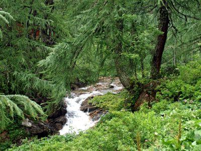 madeira, natureza, paisagem, água, folha, árvore, floresta, plantas, folhagens