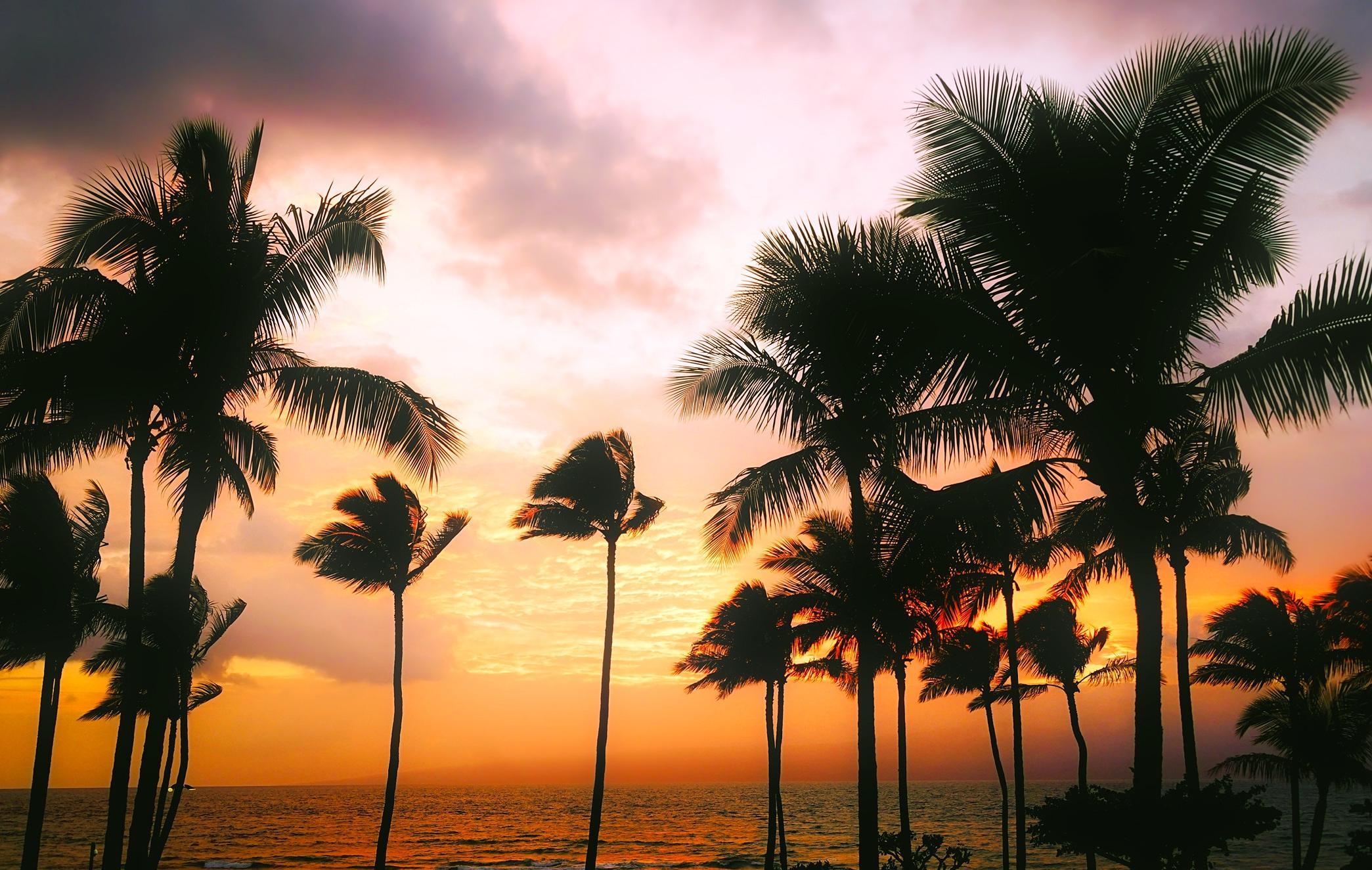 Image Libre Palm Beach Soleil Sable Mer Exotique