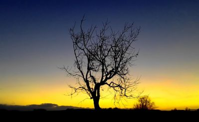 landscape, tree, dawn, sunset, silhouette, sun, nature, sky, atmosphere