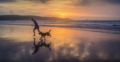 water, sunset, beach, dawn, sea, ocean, sun, man, dog