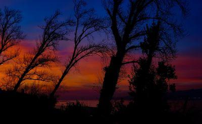 dawn, tree, landscape, sunset, backlit, sun, forest, sky, star