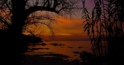 sunset, dawn, tree, landscape, sun, dusk, nature, silhouette, star