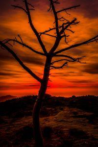puesta de sol, amanecer, silueta, retroiluminado, árbol, sol, cielo