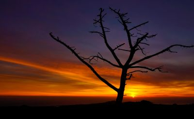 sunset, silhouette, backlit, dawn, dusk, tree, sky, sun, landscape