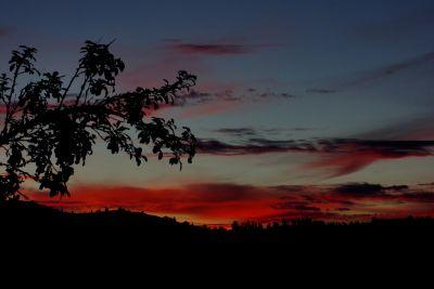 solnedgång, siluett, landskap, dawn, träd, sky, solen, stranden, ocean