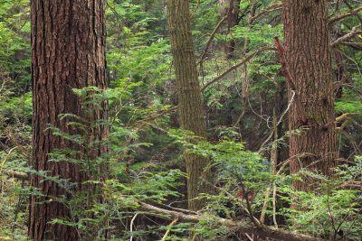 madera, árbol, naturaleza, liquen, arbusto, hierba, paisaje, coníferas, hoja, selva, planta