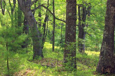 madera, árbol, naturaleza, paisaje, hoja, selva, abedul, planta