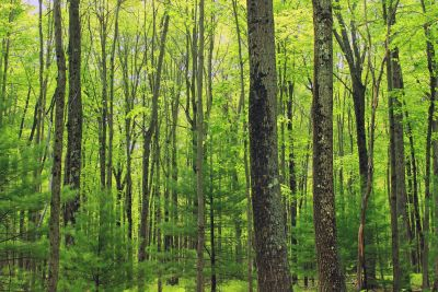 madera, naturaleza, hoja, paisaje, árbol, amanecer, bosque, abedul
