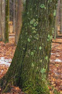 wood, tree, nature, bark, leaf, oak, forest, landscape, fence