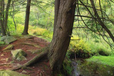 madera, árbol, paisaje, naturaleza, hoja, bosque, otoño
