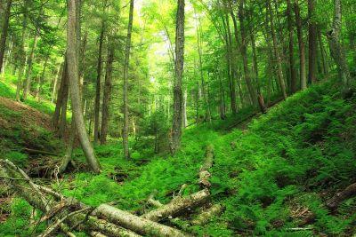 madera, naturaleza, paisaje, hoja, árbol, medio ambiente, bosque