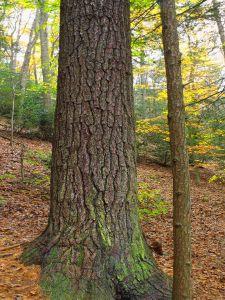 wood, tree, nature, lichen, grass, leaf, landscape, environment, beech, forest