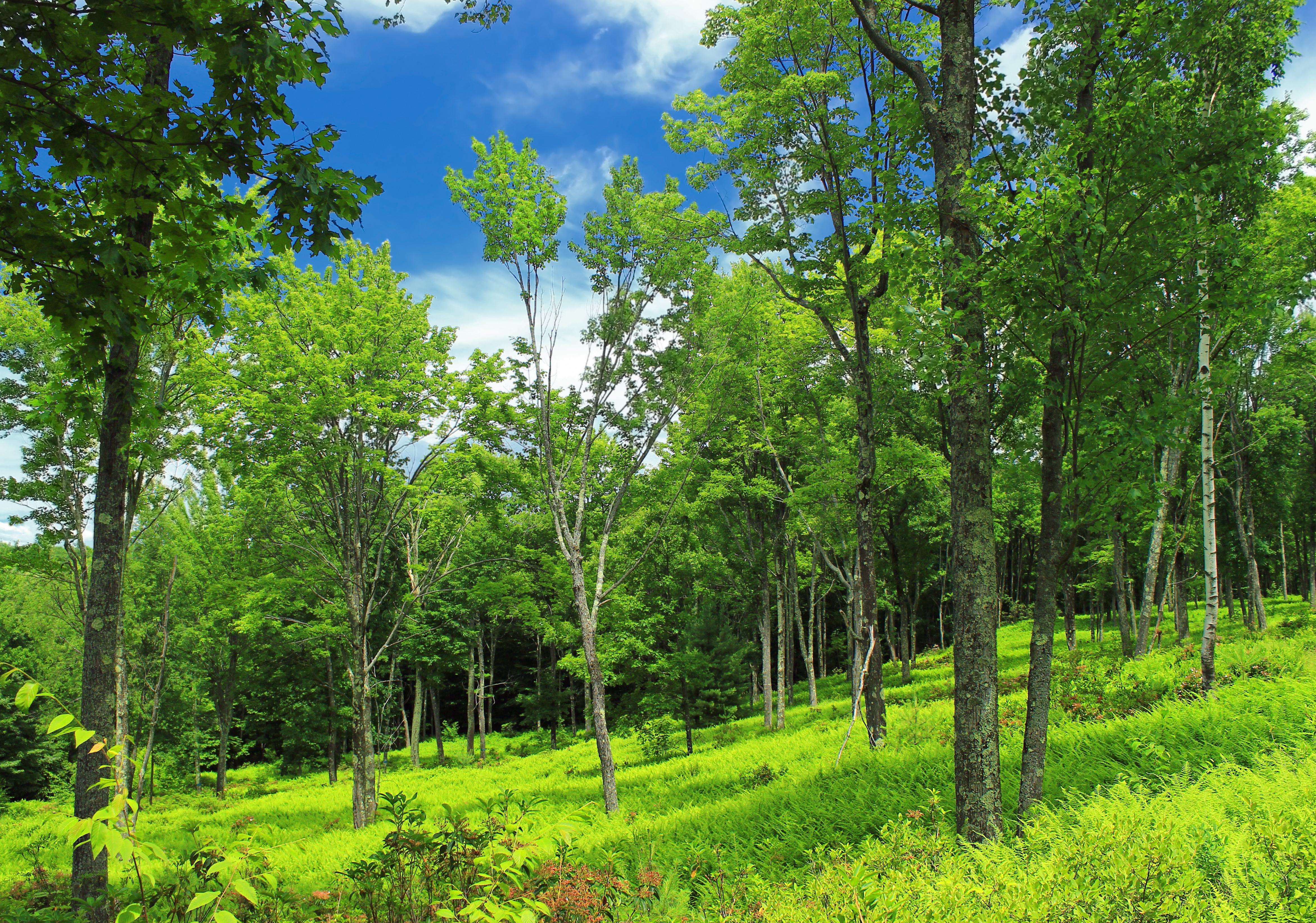 нижней лиственный лес картинки для презентации особи