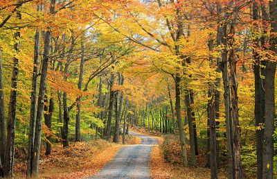 leaf, wood, tree, landscape, nature, road, autumn, forest