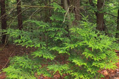 wood, leaf, nature, tree, landscape, plant, grass, forest