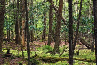 madera, árbol, naturaleza, paisaje, hoja, medio ambiente, bosque